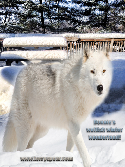 Bonnies wolf deck snow text copy