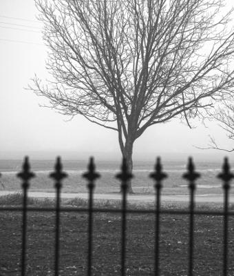 fog other neighbors yard 400