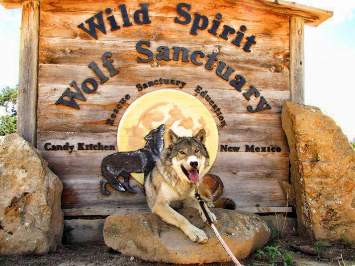zoerro_timber_wolf_at_wild_spirit_wolf_sanctuary_sign