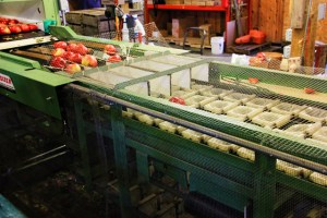 processing of apples in machine (640x427)