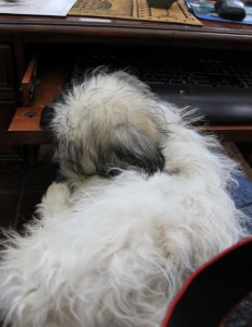 Max Sleeping on my Lap While I'm Typing