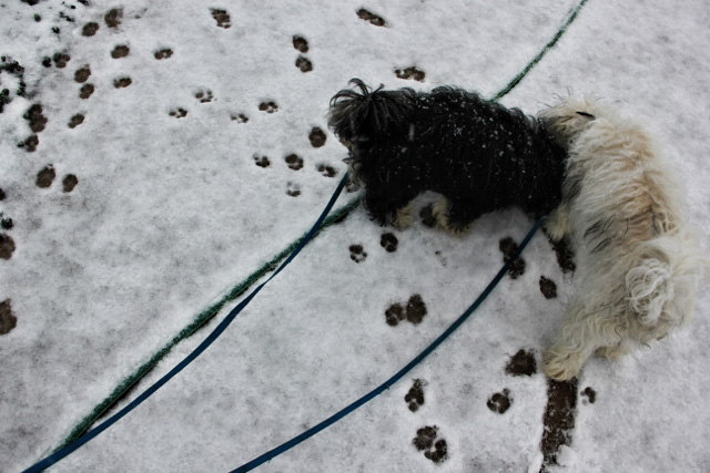 puppies and snow (640x427)