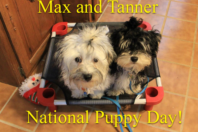 Max Tanner National Puppy Day (640x427)