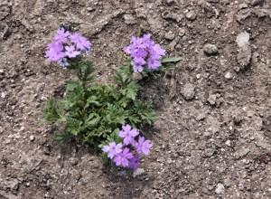 wildflowers (640x469)