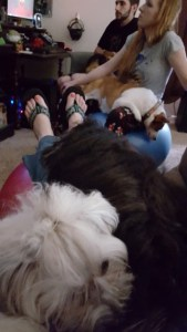 lap puppies (360x640)