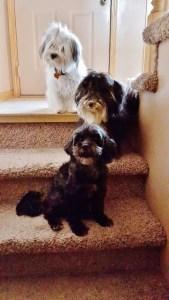 3 dogs on stairs (360x640) (4)