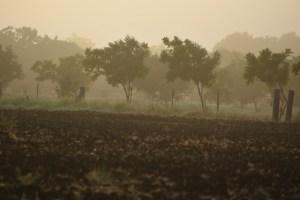 Fog at Sunrise