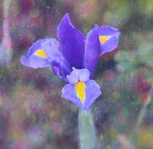 iris glitter (640x626)