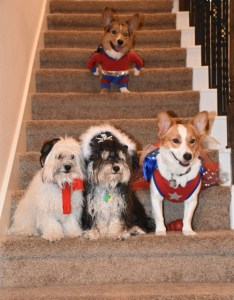 puppies in costume (500x640)