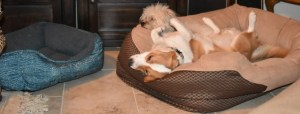 Rilo barks at Max and Luna when they play. But I didn't expect it to go this way...