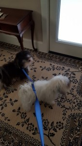 Max and Tanner ready to go out