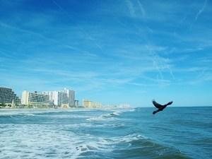 bird in flight over water (640x480)