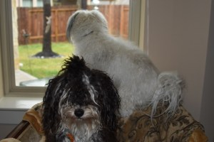 Max and Tanner and thd squirrels 006 (640x427)