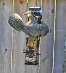 Squirrel 001 (583x640) (2)
