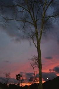 sunset (2) (427x640)