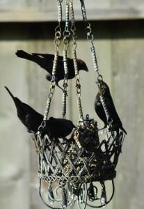 blackbirds, female and male 087 (442x640)