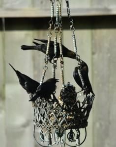 blackbirds, female and male 088 (504x640)