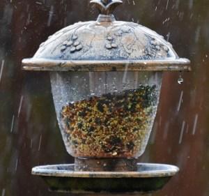 Perfect raindrop off birdfeeder (640x599)