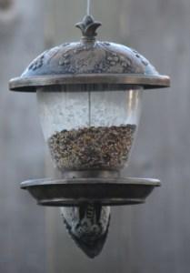 red-bellied woodpecker 003 (445x640)
