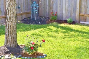 sparrows, house finch, bumblebee, lavender and red roses 044 (640x427)