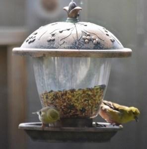 squirrel below goldfinches (631x640)
