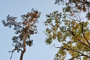 trees silhouette 002 (640x427)
