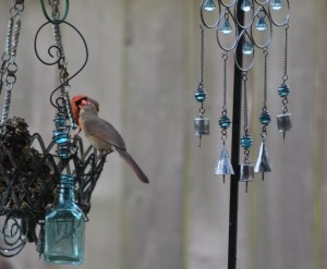 male cardinal feeding female (2) (640x527)