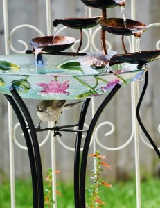 baby mockingbird under fountain (492x640)
