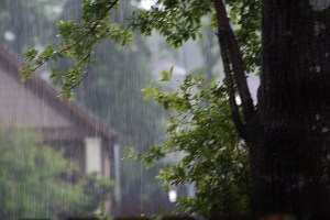 rain and tree (640x427)