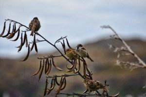 4 birds on branch (640x427)