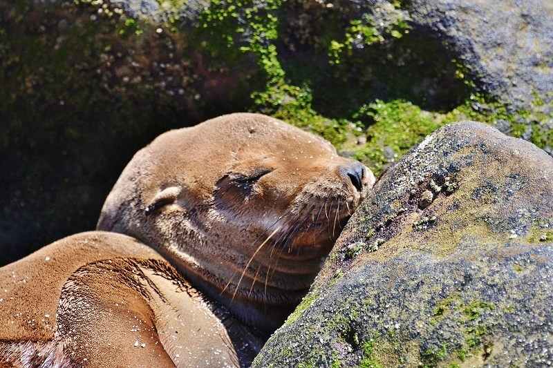 seal naptime (800x533)