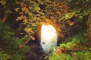 fall colors bridge (2) toffee colors sunlight underneath bridge (640x427)