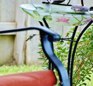 hummingbird by firecracker 001 (800x732)
