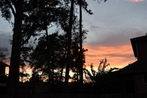sunset and red-bellied woodpeckers 008 (800x533)
