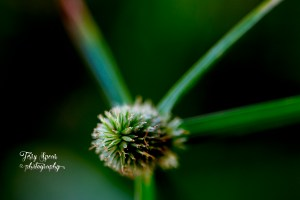 macro-garlic-grass-seeds