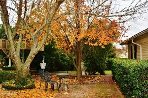 pear-tree-in-fall-colors-010-640x427
