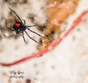 red-hour-glass-black-widow-900-closeup-012