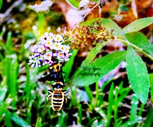 2-bumblebees-900-030