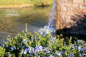 blue-flowers-water-fountains-900-156