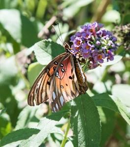 butterfly-orange-900-017