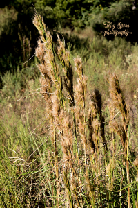 grasses-against-busy-grass-background-900-040