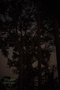 green-lights-900-lighter-sunrise-901