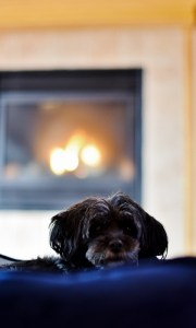 mishka-and-fireplace-480x800