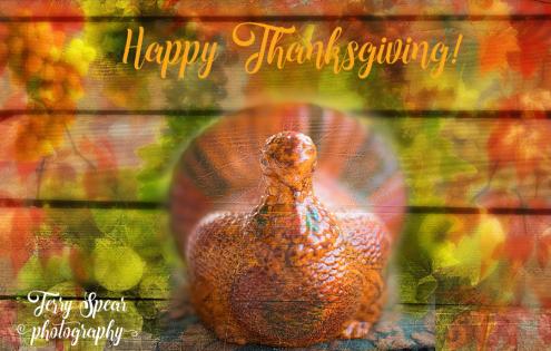 thanksgiving-ceramic-turkey-900-438240
