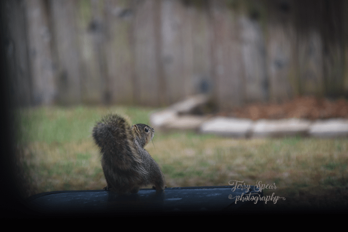squirrel-on-table-sooc-900-002