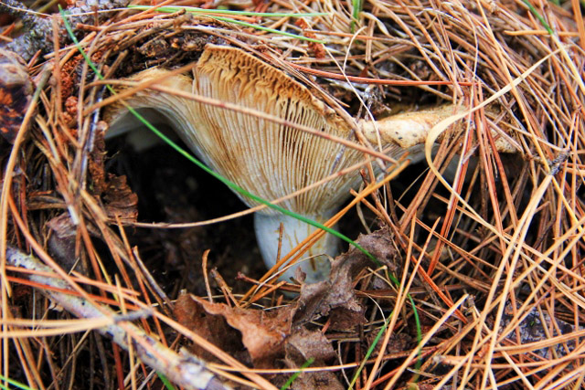 fairy mushroom home (2) (640x427)