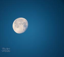 moon 900 034
