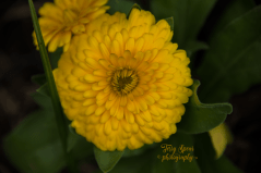 yellow flower 900_9422