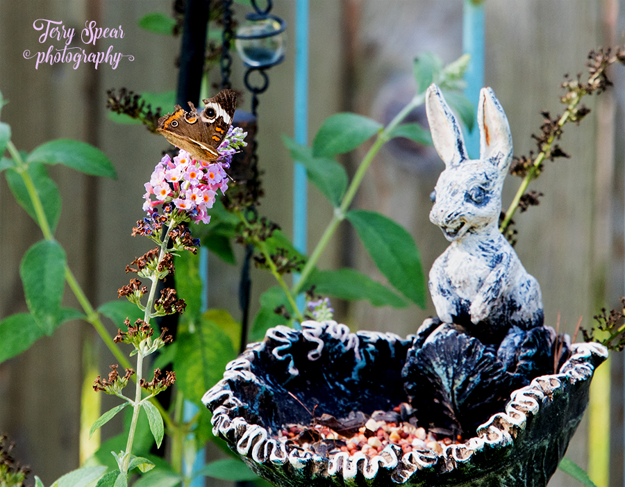 California Buckeye brown butterfly and bunny feeder 900 070