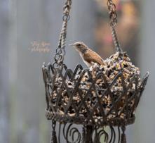unknown bird 900 086